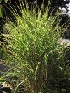 Gifts of Garden Wisdom andPlants