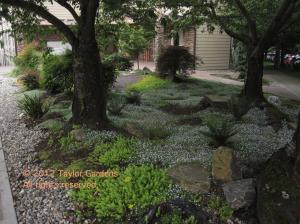 Landscape in summer - sedum, bluestar creeper, ferns,