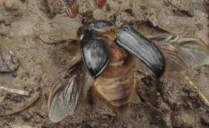 rain beetle 2011